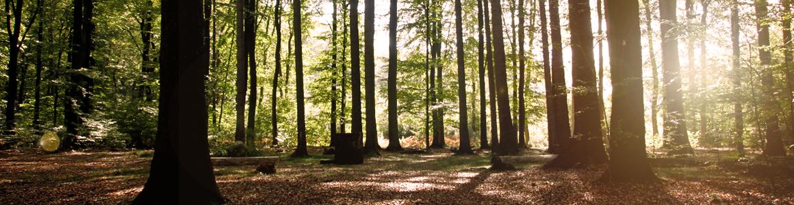 Waldbestattungen_2